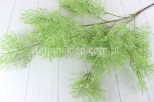 Asparagus pierzasty XLIU026 (powder lt green)